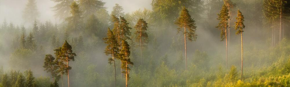 Las, Rudawy Janowickie z Sokolika