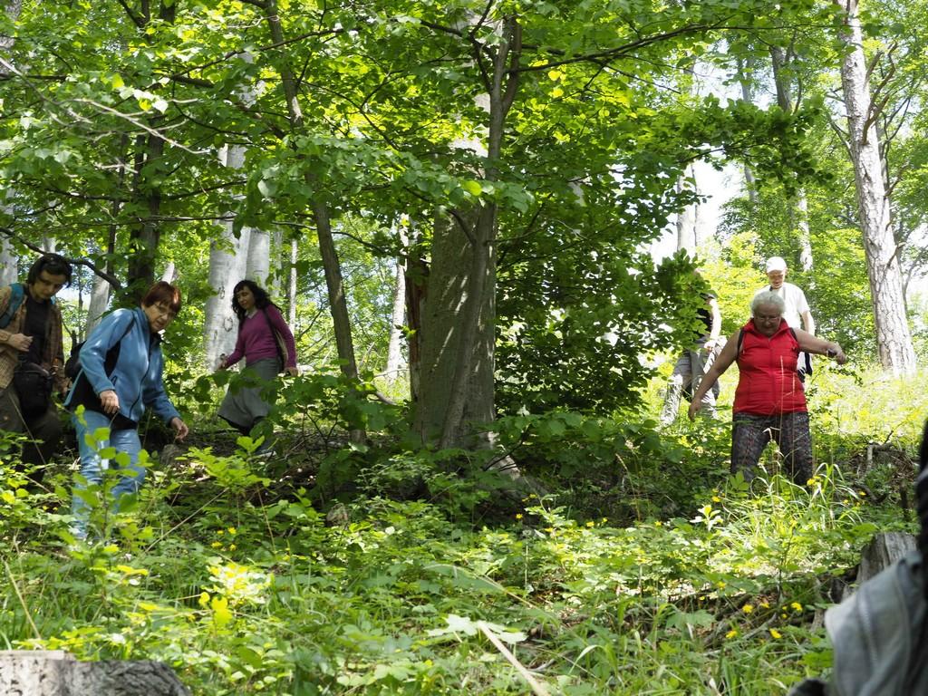 Szukając pokrzyku wilczej jagody pokonaliśmy strome stoki w okolicach Grudna