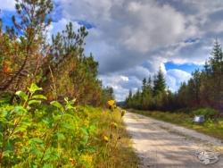 Droga przez rezerwat Torfowiska Doliny Izery (2).jpg